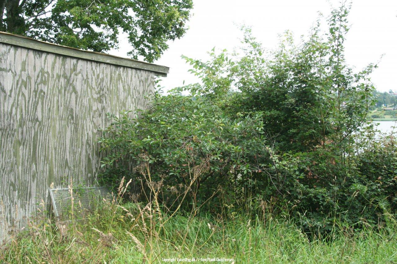 104-toms-hytte